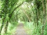 Lovely walking path going towards Pitstone, England.