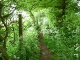 Path to Radnage, The Chiltern Hills, England.