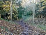 Wendover Woods can be extremely muddy at times.