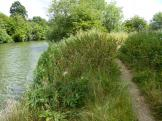 River Thames at Clifton Hampden in Oxfordshire.